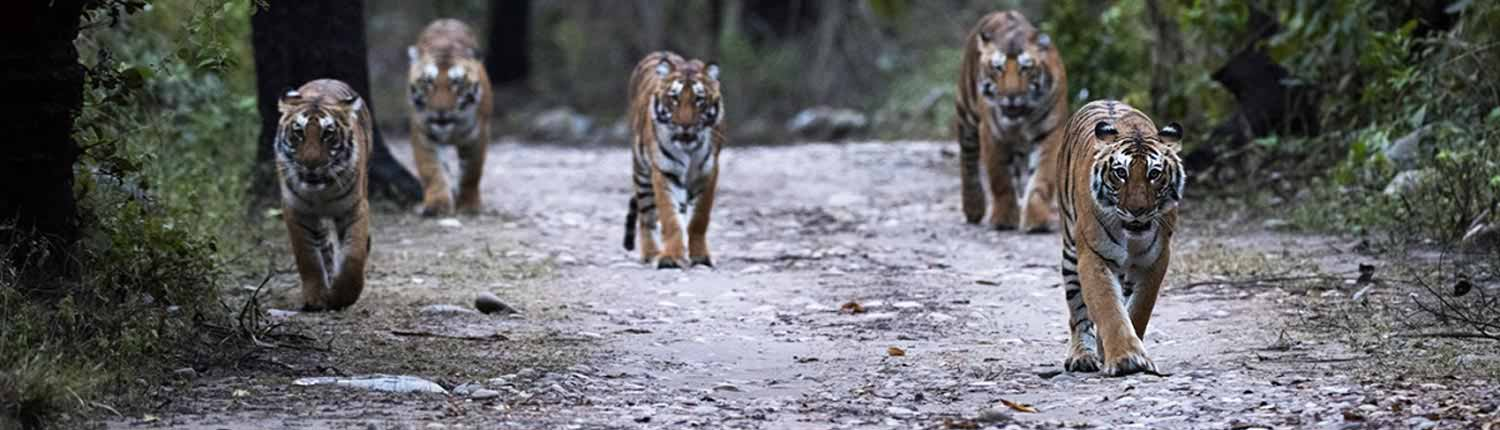 Do's And Don'ts | Jim Corbett National Park Online Booking Website | India