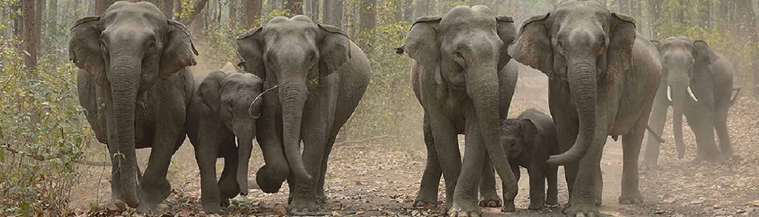 Elephant Safari Online Booking | Jim Corbett National Park Online Booking Website | India