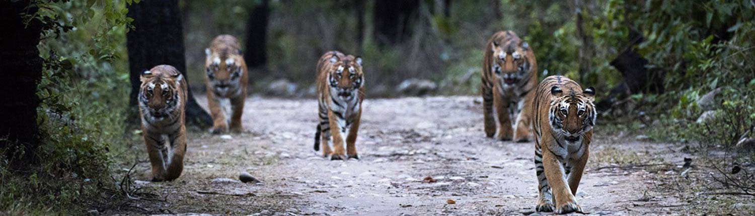 Dhikala Wildlife Tour Package | Jim Corbett National Park